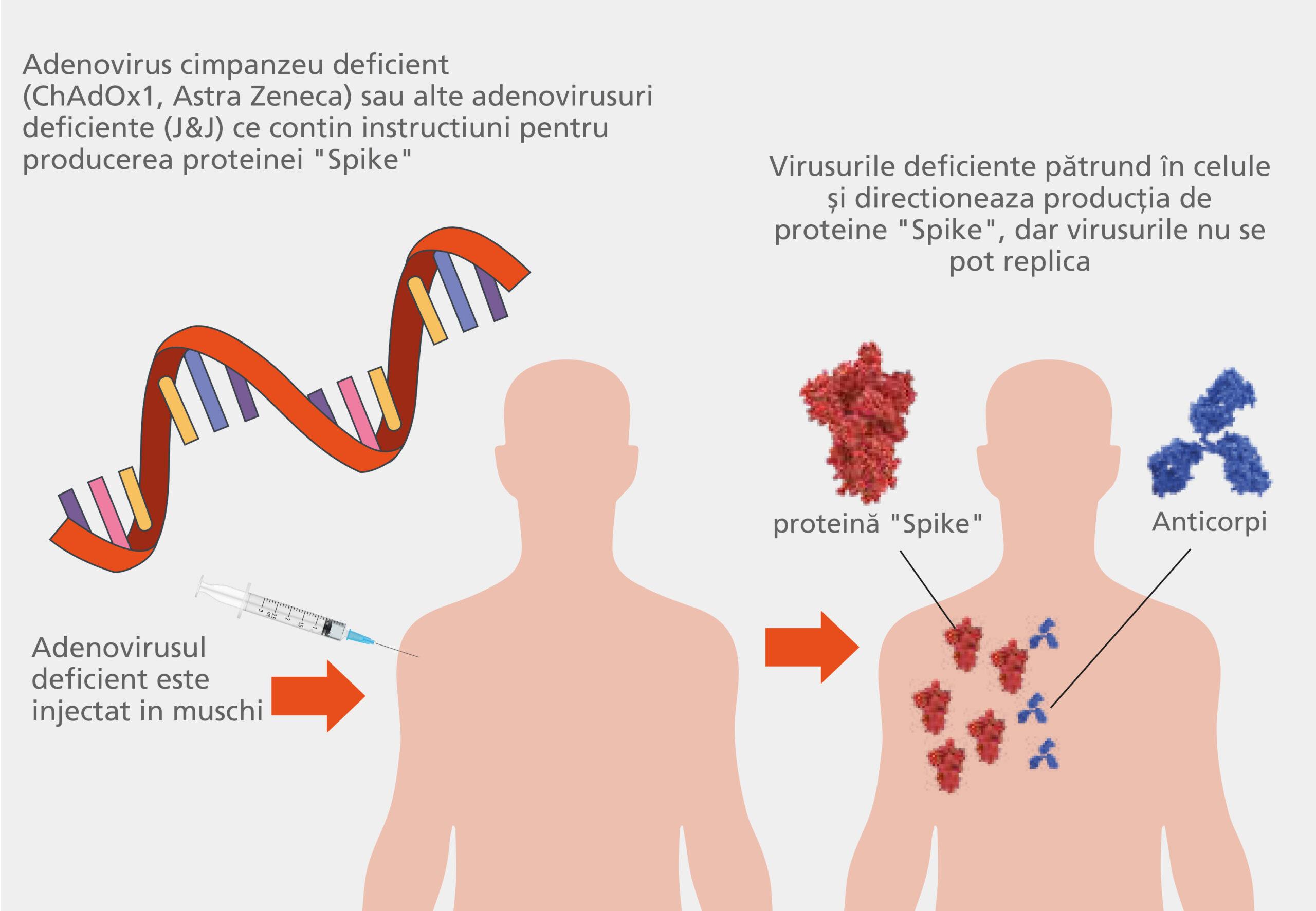 Determinarea cantitativa în vitro a anticorpilor neutralizanti anti SARS-CoV-2